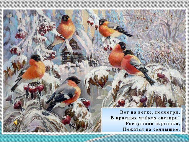 Вот на ветке, посмотри, В красных майках снегири! Распушили пёрышки, Нежатся...