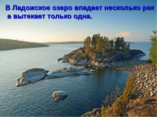 В Ладожское озеро впадает несколько рек , а вытекает только одна.