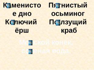 Каменистое дно Колючий ёрш Пятнистый осьминог По лзущий краб Морской конек, с
