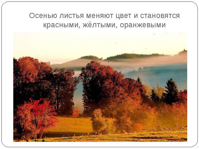 Осенью листья меняют цвет и становятся красными, жёлтыми, оранжевыми