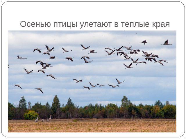 Осенью птицы улетают в теплые края