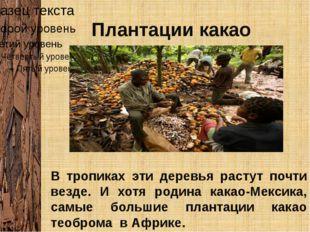 Плантации какао В тропиках эти деревья растут почти везде. И хотя родина кака