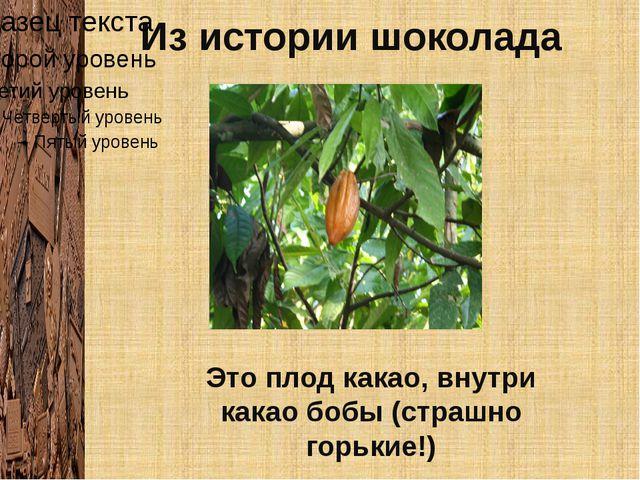 Из истории шоколада Это плод какао, внутри какао бобы (страшно горькие!)