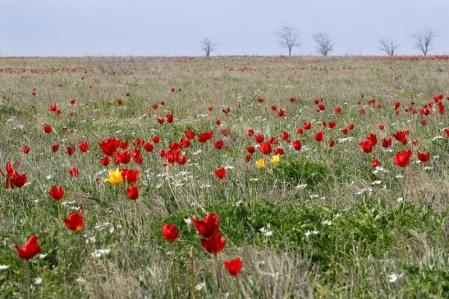 http://bytrina11.ru/wp-content/uploads/2012/09/Novorosskie-stepiust.jpg