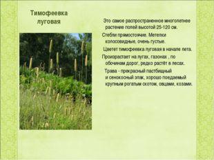 Тимофеевка луговая Это самое распространенное многолетнее растение полей выс