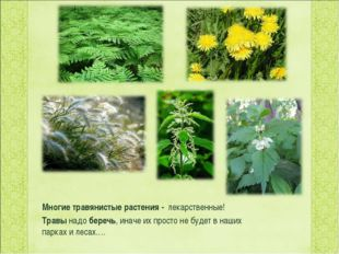 Многие травянистые растения - лекарственные! Травынадо беречь, иначе их про