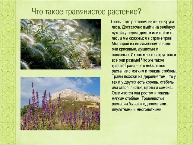 Что такое травянистое растение? Травы - это растения нижнего яруса леса. Дост...