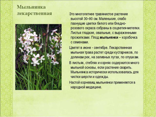 Мыльнянка лекарственная  Это многолетнеетравянистое растение высотой 30–90...