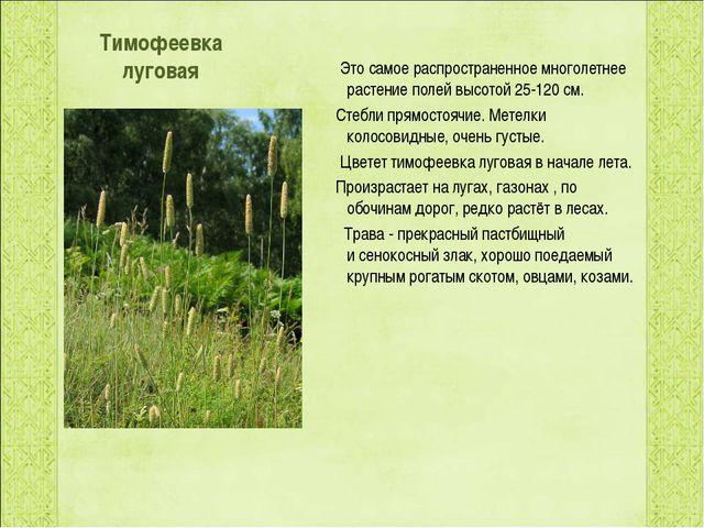 Тимофеевка луговая Это самое распространенное многолетнее растение полей выс...
