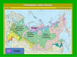 Восточно-европейская равнина Западно –сибирская равнина Средне–сибирское пло