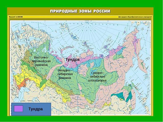 Восточно-европейская равнина Западно –сибирская равнина Средне–сибирское пло...