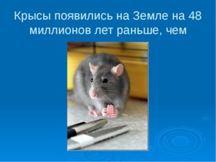 Крысы появились на Земле на 48 миллионов лет раньше, чем люди