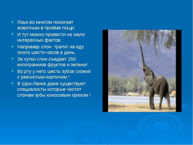Язык во многом помогает животным в приёме пищи. И тут можно привести не мало...