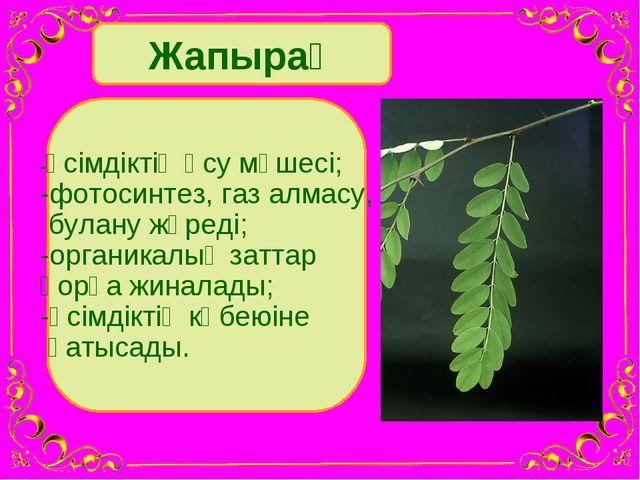 Жапырақ -өсімдіктің өсу мүшесі; -фотосинтез, газ алмасу, булану жүреді; -орга...