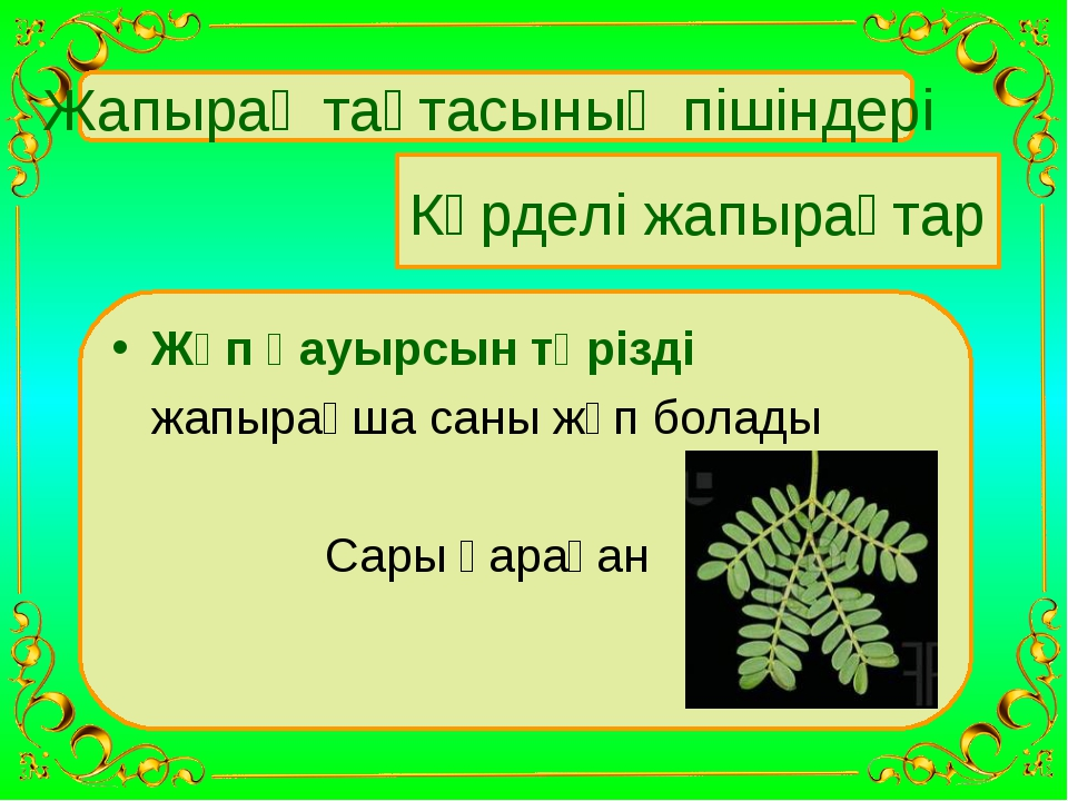 Жапырақ тақтасының пішіндері Күрделі жапырақтар Жұп қауырсын тәрізді жапырақ...