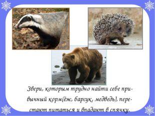 Звери, которым трудно найти себе при- вычный корм(ёж, барсук, медведь), пере
