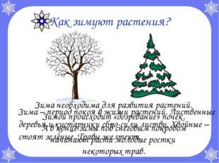Зима необходима для развития растений. Зимой происходит «дозревание» почек. А