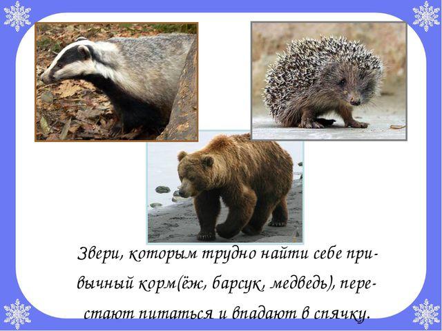 Звери, которым трудно найти себе при- вычный корм(ёж, барсук, медведь), пере...