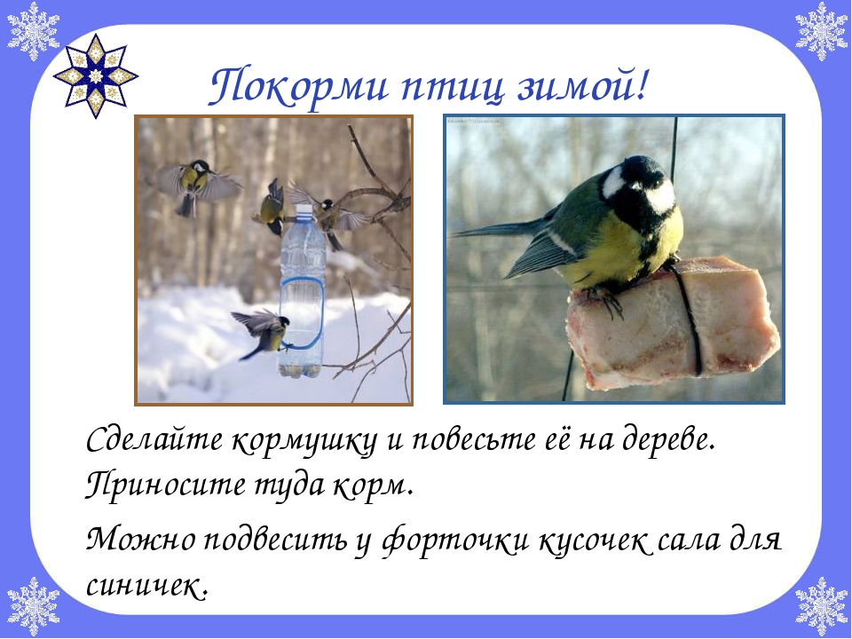 Покорми птиц зимой! Сделайте кормушку и повесьте её на дереве. Приносите туд...