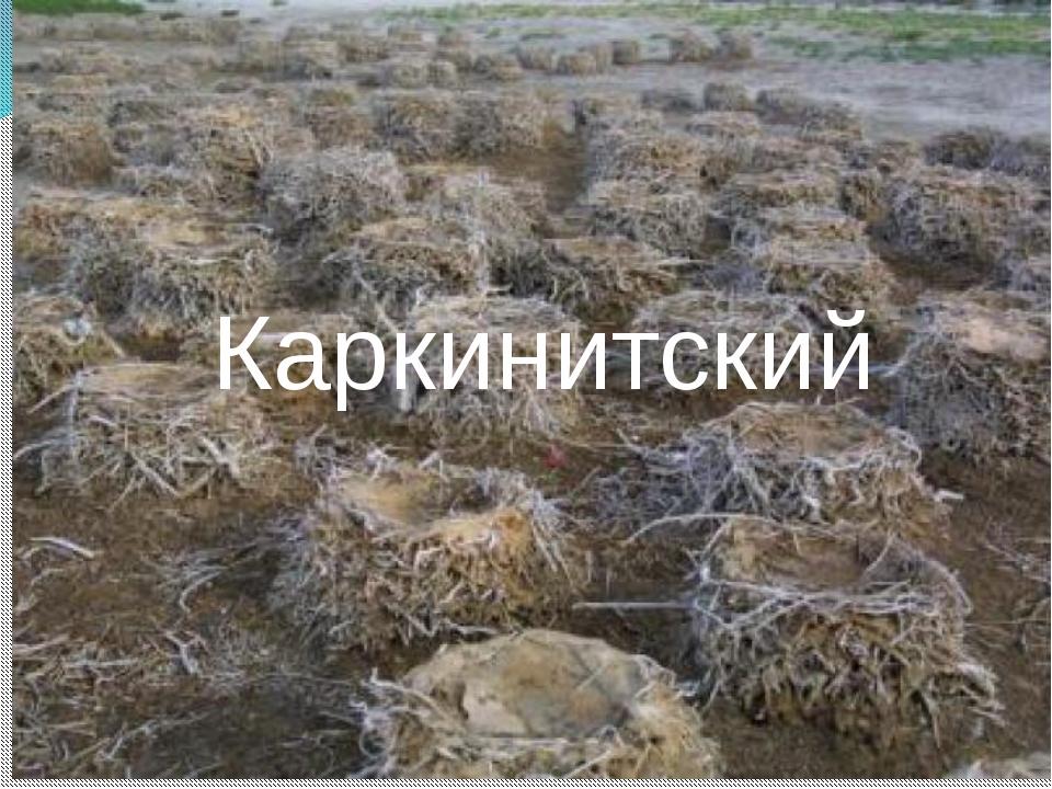 Каркинитский