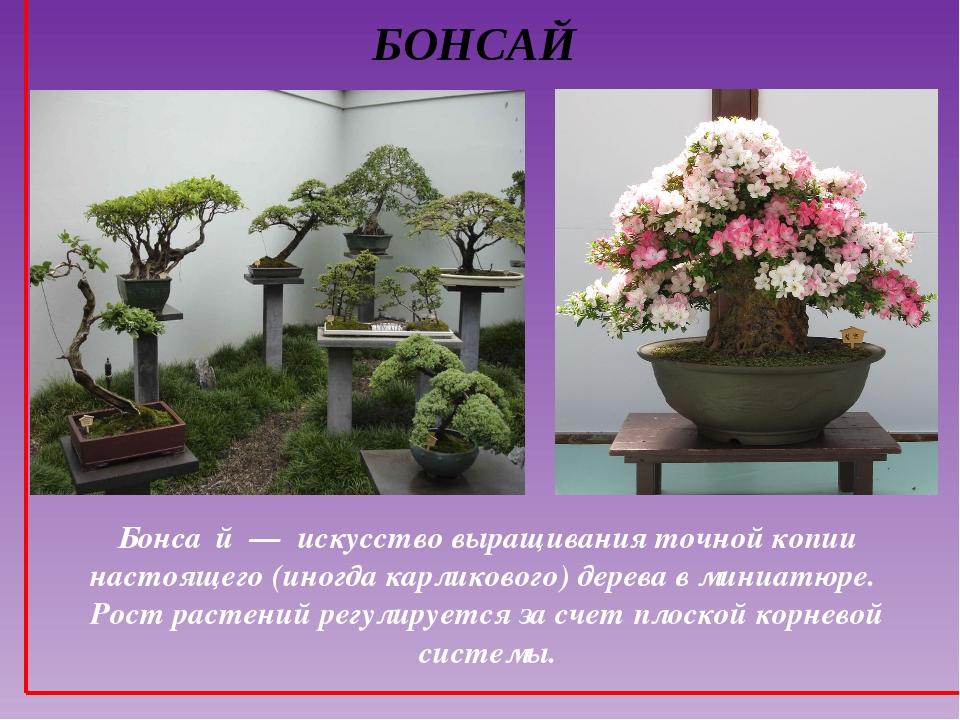 БОНСАЙ Бонса́й — искусство выращивания точной копии настоящего (иногда карлик...