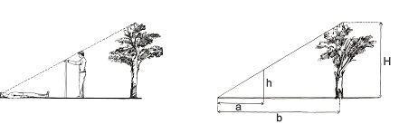 http://wiki.pathfinders.org.ua/images/8/80/Tree_height_method1.jpg