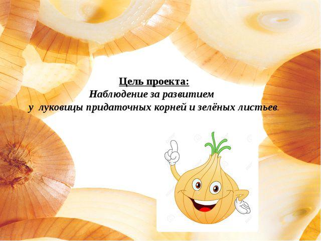 Цель проекта: Наблюдение за развитием у луковицы придаточных корней и зелёных...