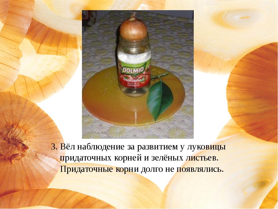 3. Вёл наблюдение за развитием у луковицы придаточных корней и зелёных листье...