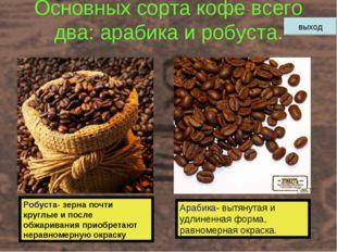 Основных сорта кофе всего два: арабика и робуста. Робуста- зерна почти круглы