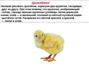 Цыплёнок Начиная рисовать цыплёнка, нарисуем два кружочка, заходящих друг на