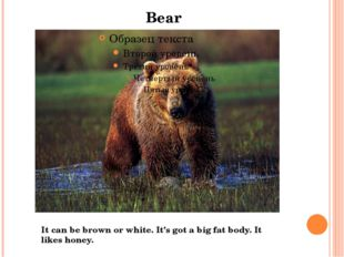 Bear It can be brown or white. It's got a big fat body. It likes honey.
