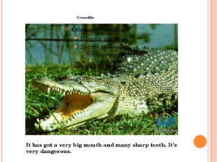 Crocodile It has got a very big mouth and many sharp teeth. It's very danger