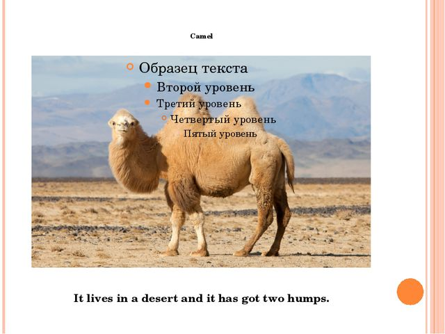 Camel It lives in a desert and it has got two humps.