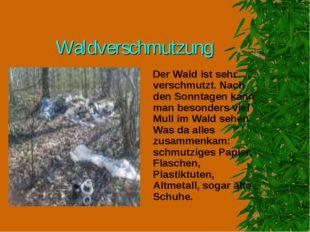 Waldverschmutzung Der Wald ist sehr verschmutzt. Nach den Sonntagen kann man