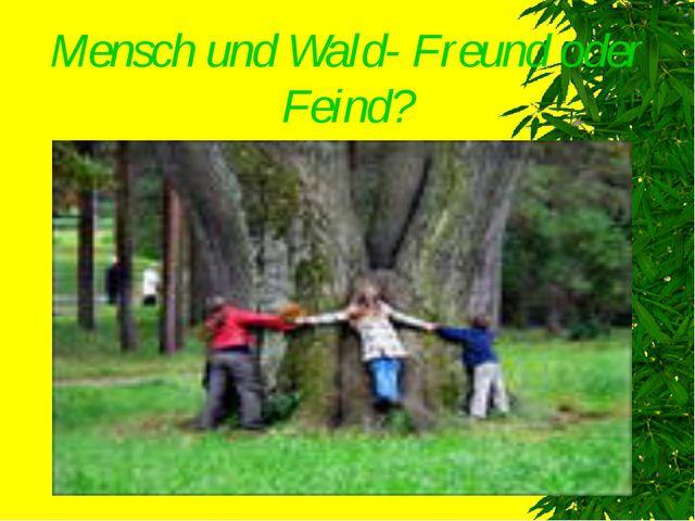 Mensch und Wald- Freund oder Feind?