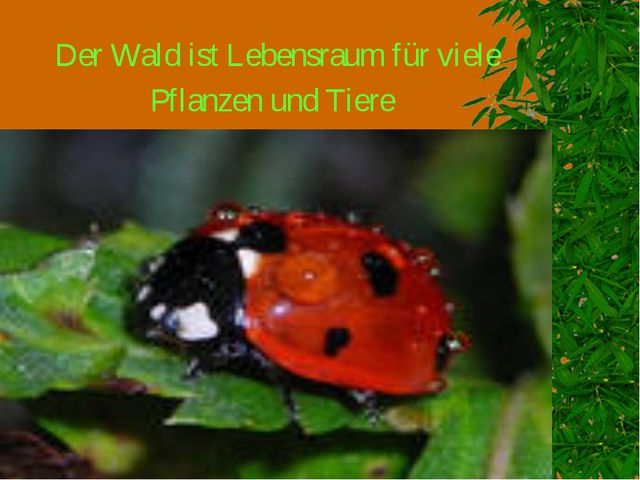 Der Wald ist Lebensraum für viele Pflanzen und Tiere
