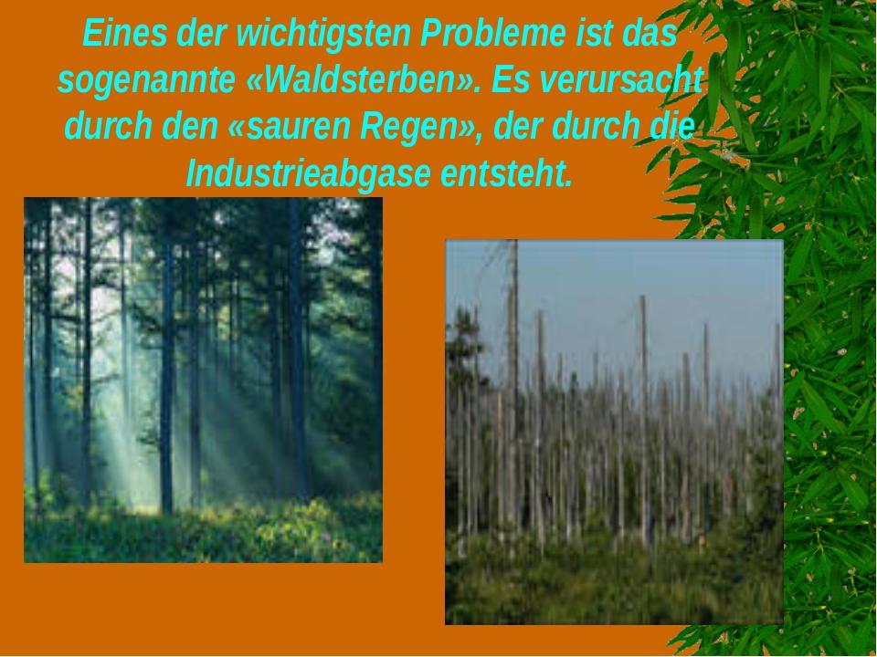 Eines der wichtigsten Probleme ist das sogenannte «Waldsterben». Es verursach...