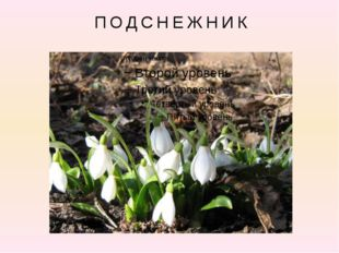 На лесной проталинке Вырос цветик маленький. Прячется в валежник Беленький .
