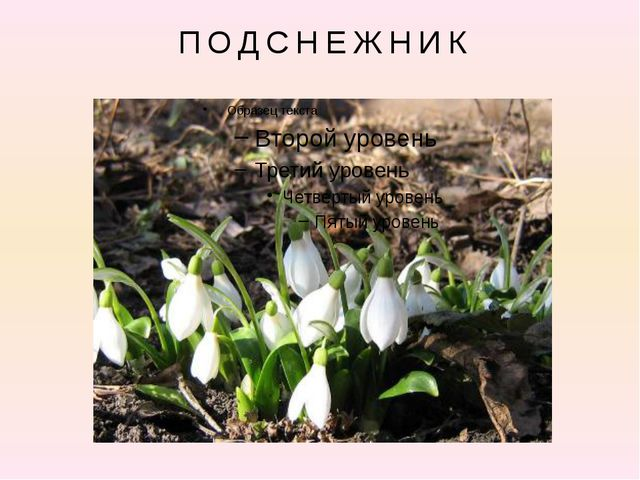 На лесной проталинке Вырос цветик маленький. Прячется в валежник Беленький ....