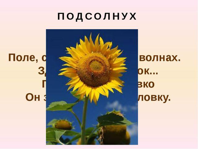 ПОДСОЛНУХ Поле, словно в желтых волнах. Здесь растет цветок... Поворачивает л...
