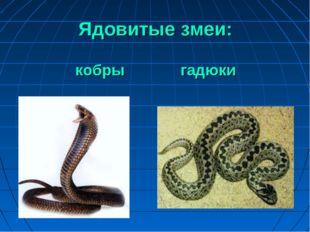 Ядовитые змеи: кобры гадюки