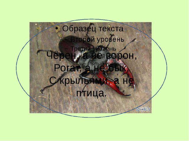 Чёрен, а не ворон, Рогат, а не бык, С крыльями, а не птица.