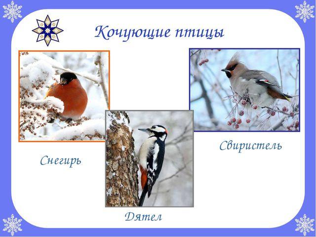 Кочующие птицы  Снегирь Дятел Свиристель