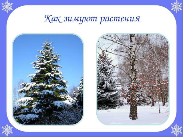 Как зимуют растения