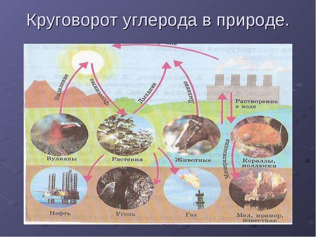 Круговорот углерода в природе.