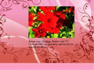 Флокс сорт Октябрь. Вывел сорт П.Г Гаганов 1967год. Диаметр цветка-3.6 см., в