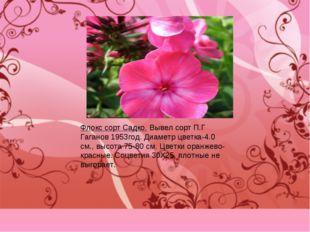 Флокс сорт Садко. Вывел сорт П.Г Гаганов 1953год. Диаметр цветка-4.0 см., выс