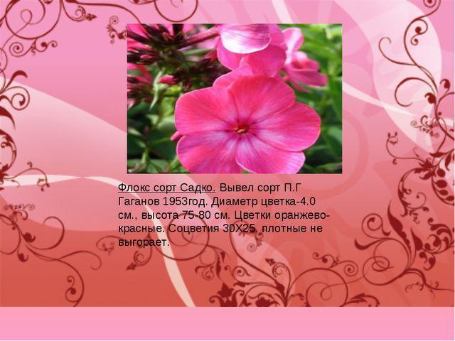 Флокс сорт Садко. Вывел сорт П.Г Гаганов 1953год. Диаметр цветка-4.0 см., выс...