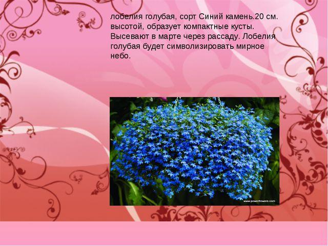 лобелия голубая, сорт Синий камень.20 см. высотой, образует компактные кусты....