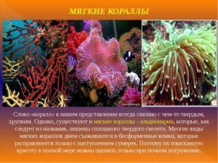 МЯГКИЕ КОРАЛЛЫ Слово «коралл» в нашем представлении всегда связано с чем-то т